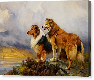 Two Collies Above A Lake Canvas Print by Wright Barker