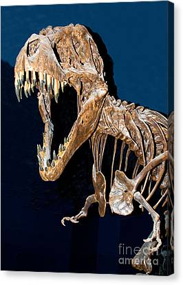 Tyrannosaurus Rex Canvas Print by Millard H. Sharp