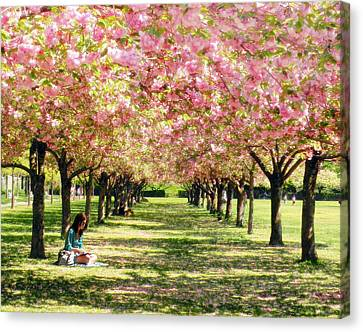 Canvas Print featuring the photograph Under The Cherry Blossom Trees by Nina Bradica