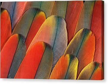 Underside Wing Coloration Canvas Print