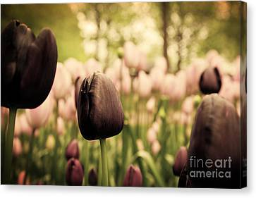 Unique Black Tulip Flowers In Green Grass Canvas Print by Michal Bednarek