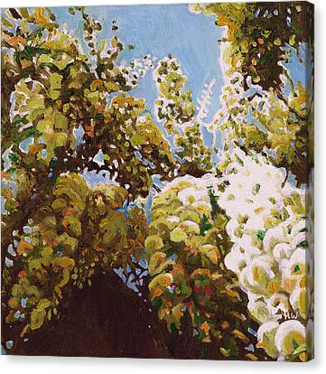 Up Into Wisteria Canvas Print by Helen White
