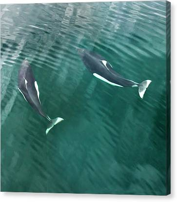 Usa, Alaska, Seymour Canal Canvas Print by Jaynes Gallery