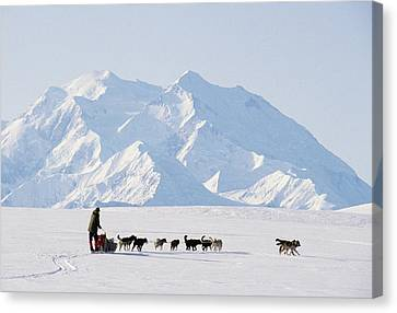 Gerry Canvas Print - Usa, Alaska, Sled Dogs, Park Ranger by Gerry Reynolds