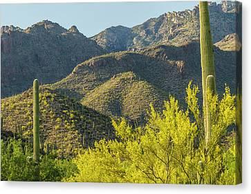 Usa, Arizona, Coronado National Forest Canvas Print by Jaynes Gallery