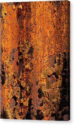 Usa, Arizona, Tucson, Texture Canvas Print by Peter Hawkins