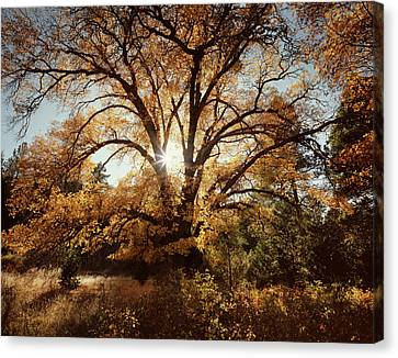 Usa, California, Cleveland National Canvas Print by Christopher Talbot Frank