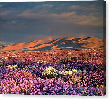 Usa, California, Dumont Dunes Canvas Print by Jaynes Gallery