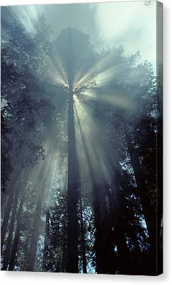 Usa, California, Sun, Smoke, Forest Canvas Print by Gerry Reynolds