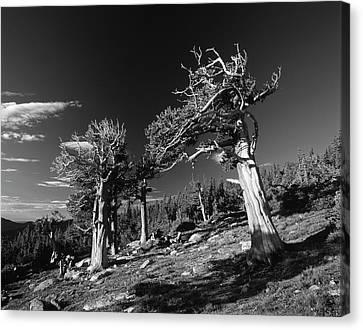 Usa, Colorado, Arapaho National Forest Canvas Print