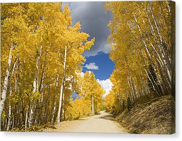 Usa, Colorado, Near Steamboat Springs Canvas Print by Ron Dahlquist