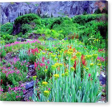 Columbine Canvas Print - Usa, Colorado, Wildflowers In Yankee by Jaynes Gallery