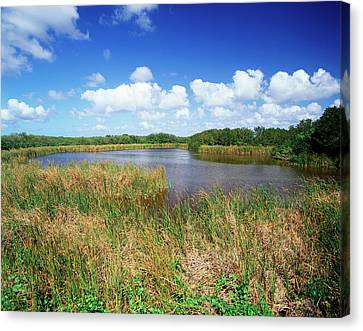 Everglades National Park Canvas Print - Usa, Florida, Everglades National Park by Adam Jones