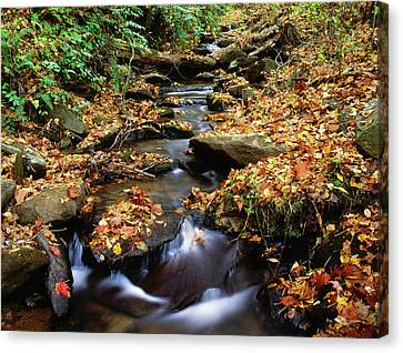 Usa, Georgia, Cherokee National Forest Canvas Print by Jaynes Gallery