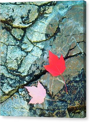 Usa, Maine, A Maple Leaf On A Rock Canvas Print by Jaynes Gallery