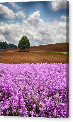 Usa, Oregon, Farming In The Willamette Canvas Print by Terry Eggers