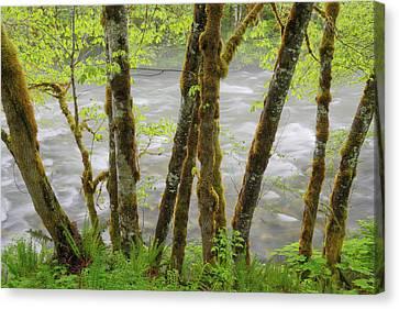 Usa, Washington, Cascade Mountains Canvas Print by Jaynes Gallery