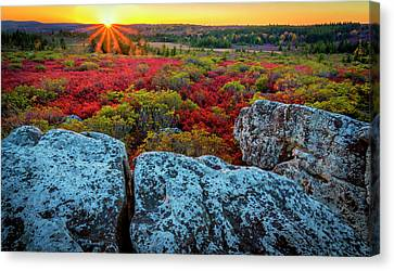 Sod Canvas Print - Usa, West Virginia, Dolly Sods by Jaynes Gallery