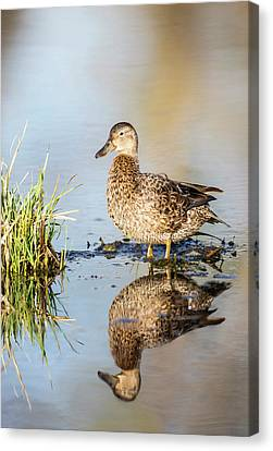 Usa, Wyoming, Sublette County, Female Canvas Print by Elizabeth Boehm