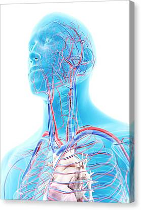 Human Head Canvas Print - Vascular System In Head by Sciepro