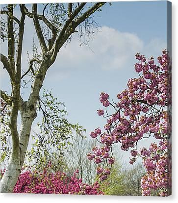 Canvas Print - Victoria Park Chatham by Dawn OConnor