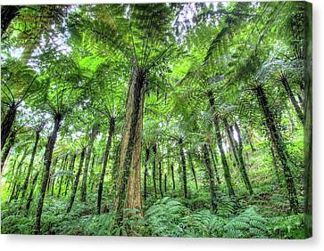 Exoticism Canvas Print - View Of Vegetation In Bali Botanical by Jaynes Gallery