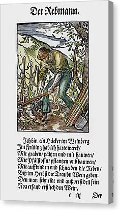 Vinegrower, 1568 Canvas Print by Granger