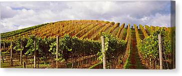 Vineyard At Napa Valley, California, Usa Canvas Print by Panoramic Images
