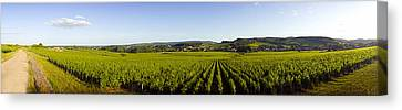 Winemaking Canvas Print - Vineyard, Mercurey, France by Panoramic Images