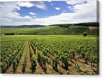 Vineyard Of Cotes De Beaune. Cote D'or. Burgundy. France. Europe Canvas Print by Bernard Jaubert