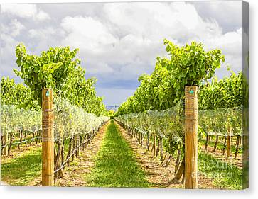 Vineyard Canvas Print by Patricia Hofmeester
