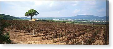 Vineyard, Sitges, Barcelona, Catalonia Canvas Print by Panoramic Images