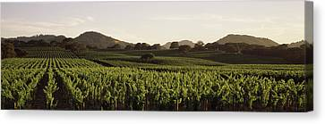 Vineyard With Mountains Canvas Print by Panoramic Images