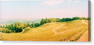 Vineyards In Spring, Napa Valley Canvas Print by Panoramic Images