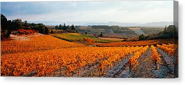 Vineyards In The Late Afternoon Autumn Canvas Print