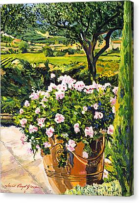 South Of France Canvas Print - Vineyards Of Provence by David Lloyd Glover