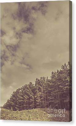 Vintage Pine Forest Landscape In Strahan Tasmania Canvas Print by Jorgo Photography - Wall Art Gallery