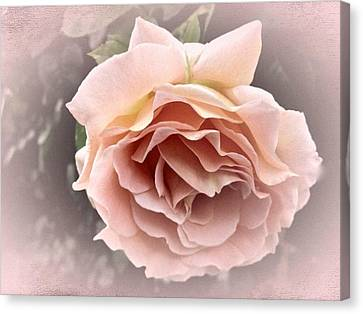 Vintage Rose No. 3 Canvas Print by Richard Cummings