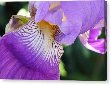 Canvas Print featuring the photograph Violet by Nora Boghossian
