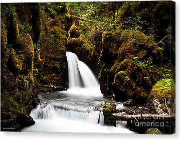 Virgin Creek Falls Canvas Print by Chris Heitstuman