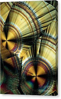 Vitamin C Crystals Canvas Print by Claude Nuridsany and Marie Perennou