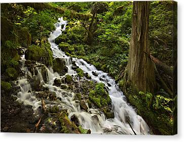 Wahkeena Creek Canvas Print by Mary Jo Allen