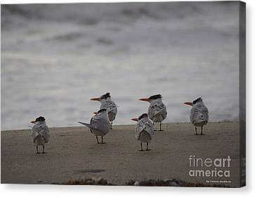 Canvas Print - Waiting For The Sunrise by Tannis  Baldwin