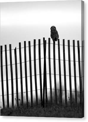 Waiting Owl Canvas Print