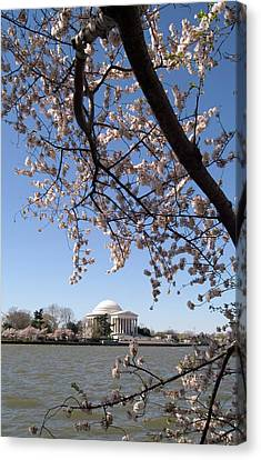 Washington, Dc, Cherry Blossom Festival Canvas Print by Lee Foster