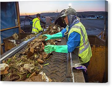 Waste Sorting At Composting Facility Canvas Print by Peter Menzel