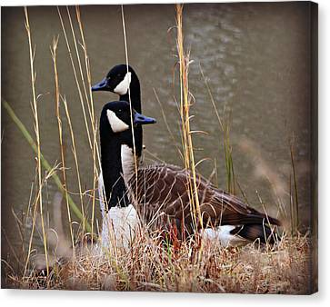 Watchful Canvas Print by Mary Zeman