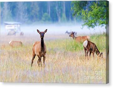 Watchful Canvas Print by Mike Dawson