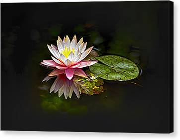 Water Lily Canvas Print by Bill Barber