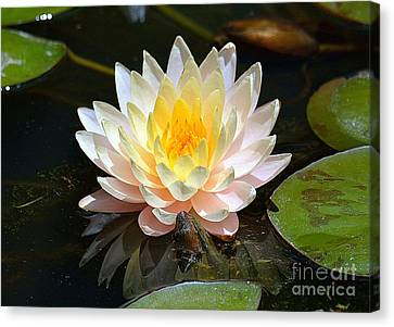 Canvas Print featuring the photograph Water Lily by Lisa L Silva